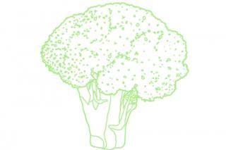 Illustration eines Brokkolis. Illustration: Christina Uhl