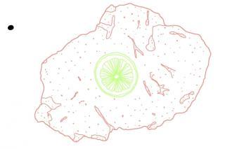 Illustration eines Wiener Schnitzels mit einer Zitronenscheibe. Illustration: Christina Uhl